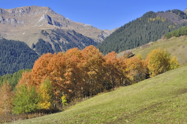 Trees with beautiful autumnal colors in a copse in front of rocky mountain