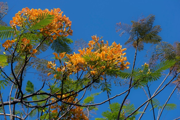 Trees with bright colors cut against the blue sky