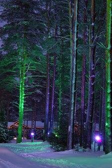 숲에서 밝은 빛을 가진 나무입니다.