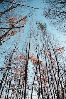 秋の季節に茶色と赤の葉を持つ木