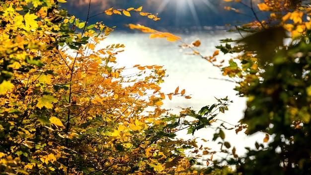 Деревья с красочными осенними листьями у реки в солнечную погоду