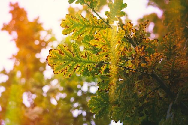 秋の自然の中で色とりどりの葉を持つ木
