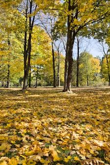 Деревья с опавшими листьями
