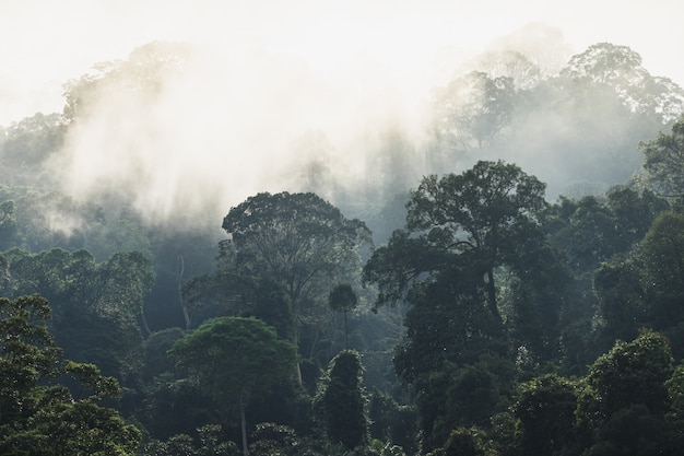 Trees with fog after raining on the hill in tropical rain forest