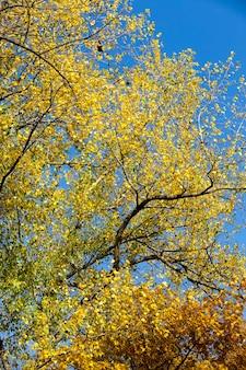 落葉時に葉のある木