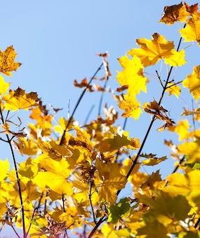 Деревья с листвой