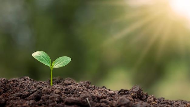 Деревья с зелеными листьями, растущими на земле в размытом зеленом фоне природы, лесовосстановлении и концепции охраны окружающей среды.