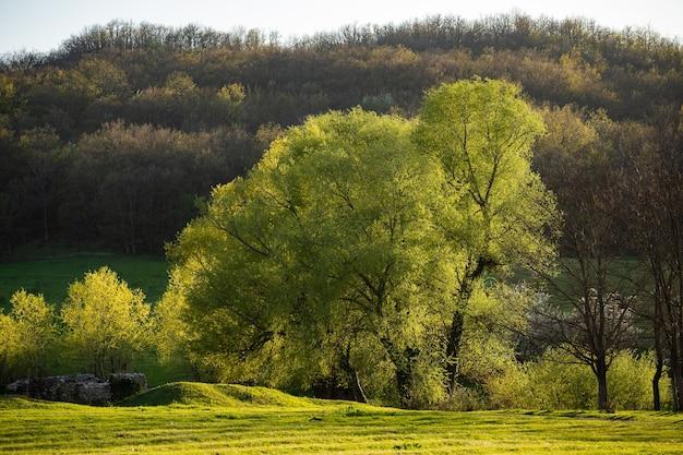 Деревья с зелеными листьями. летний солнечный день. прекрасная природа.