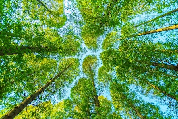 Деревья с зелеными листьями