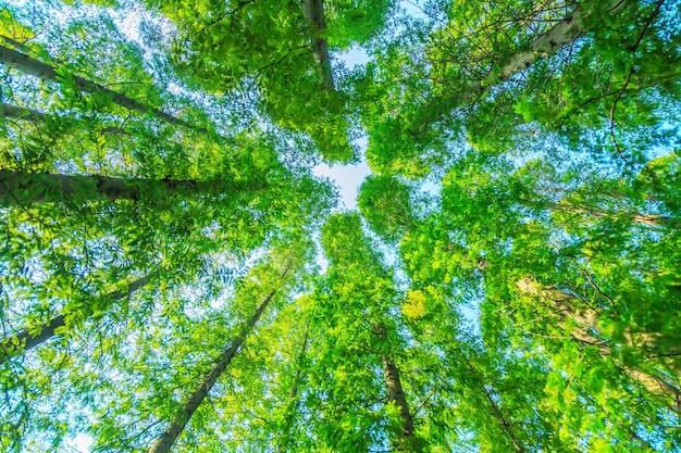 Alberi con foglie verdi