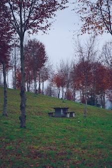 秋の山の紅葉の木