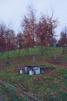 山の紅葉の木
