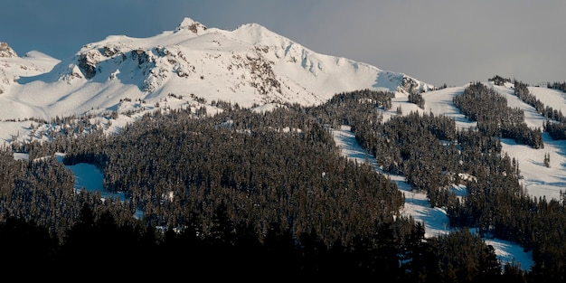Trees with snow covered mountains in winter, whistler, british columbia, canada
