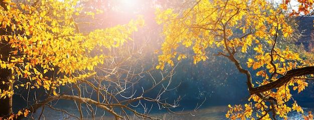 太陽の下で川沿いの黄色い紅葉の木