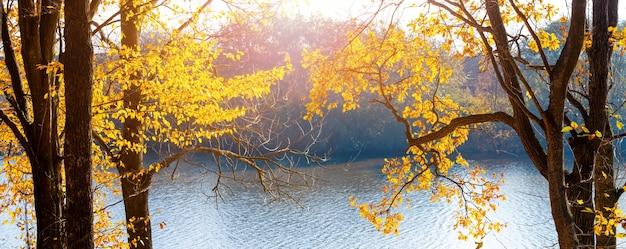 晴れた日に川沿いに黄色い紅葉の木々