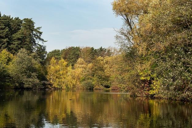 川沿いの黄色い葉を持つ木