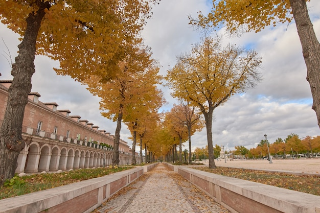 Trees with yellow leaves in autumn and cloudy sky in aranjuez