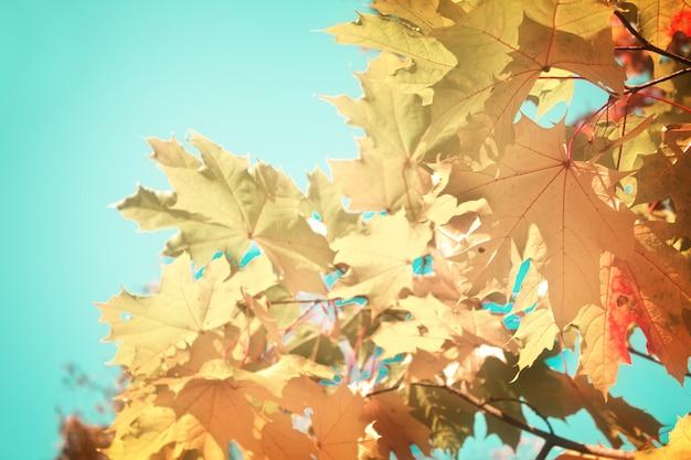 Деревья с желтыми листьями в осеннем парке на ярко-синем небе, в тонах в стиле ретро