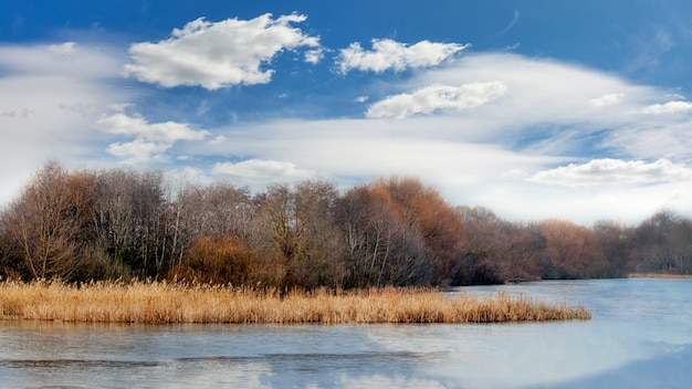 秋の川に落ち葉のない木々