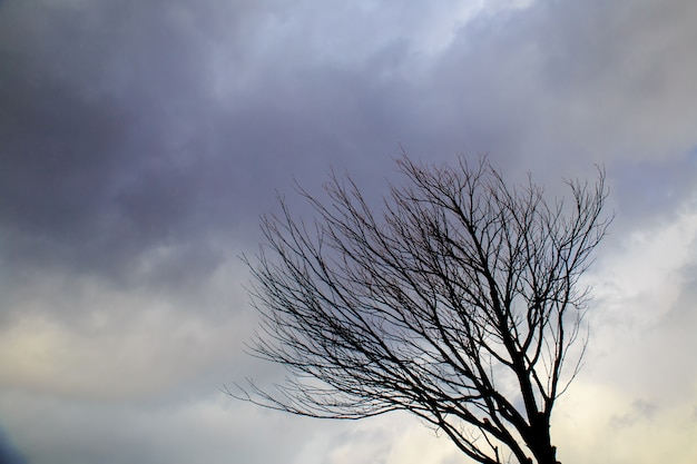 Trees without leaves in winter at a day with blue sky.
