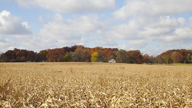 木森農場インディアナ秋の森の四季