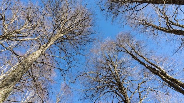 나무 꼭대기는 러시아 소치에서 위쪽으로 ftom을 볼 수 있습니다.