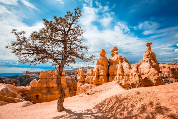 Trekking queens garden trail in bryce national park, utah. united states