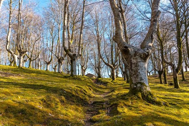 기푸스코아(gipuzkoa)의 oiartzun 마을에 있는 oianleku 너도밤나무 숲의 트레킹 트레일. 스페인