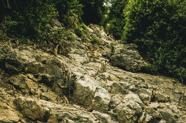 Trekking forestale del legno avanti bosco di paesaggio