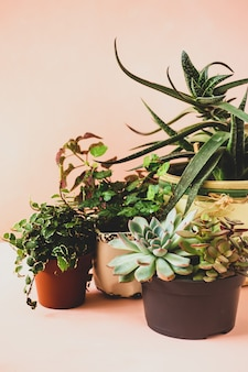 さまざまな屋内植物と多肉植物のピンクの背景のトレンドコレクション
