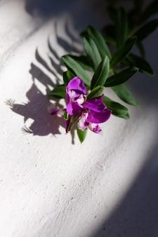 Модный 2021 вдохновляющая эстетика ветка цветка фиолетового куста на хлопковом бежевом фоне, тени от ветки