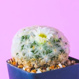 ピンクの背景の壁にトレンディなサボテンの植物。最小限のクリエイティブスタイル