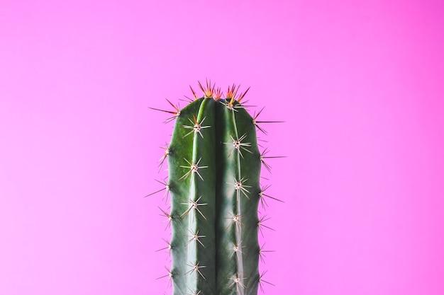 ピンクの壁にトレンディなサボテンの植物