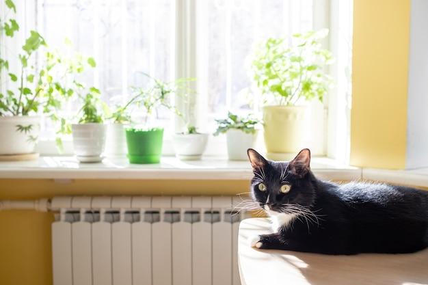 Модный домашний интерьер: размытое окно с зелеными комнатными растениями и черной кошкой, лежащей на столе и греющейся на солнце.