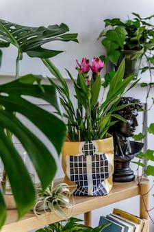 나무 콘솔, 아름다운 식물, 열대 잎, 책, 공기 식물, 선반, 장식, 회색 벽, 나무 패널 및 세련된 가정 정원의 개인 액세서리가있는 트렌디 한 거실 인테리어.