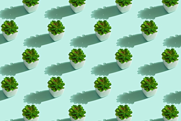 Trendy pattern of green succulents in white pots, stone rose concept