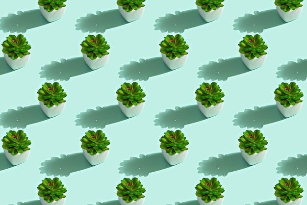 白い鉢の緑の多肉植物のトレンディなパターン、ストーンローズのコンセプト