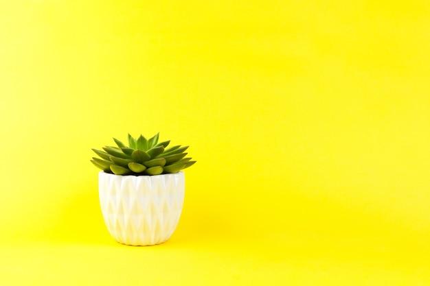 黄色の背景に白い植木鉢でトレンディなジューシーなhaworthiacymbiformis