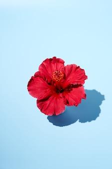 上面から見たハイビスカスの花のトレンディな夏のポップアートデザイン。スペースをコピーします。