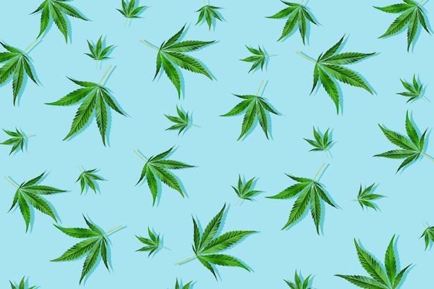 밝은 파란색 배경의 최소한의 개념에 녹색 잎 대마초가 있는 세련된 햇빛 도심 패턴