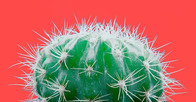 Trendy tropical neon cactus plant on red