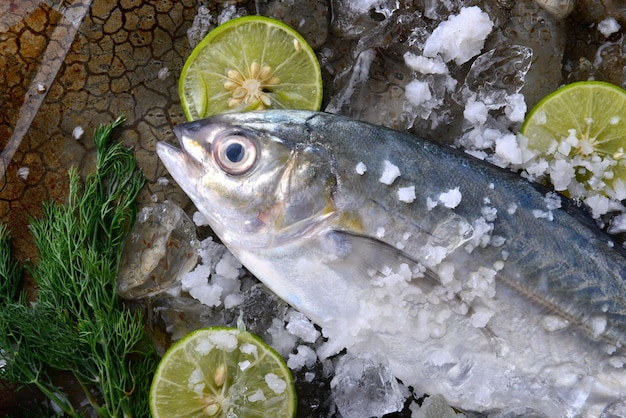 Trevally fish or jack with ice salt and lemon.
