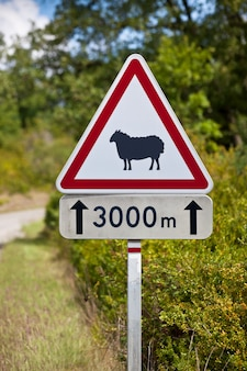 田舎道の道路上の羊の三角形の交通標識警告