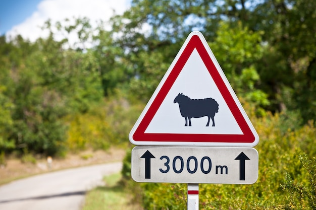 Triangular traffic sign warning of sheep on the road on a rural road