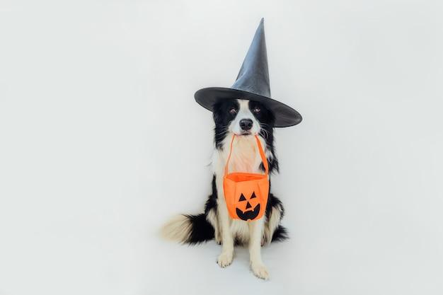Кошелек или жизнь концепция. забавный щенок бордер-колли в костюме ведьмы шляпы хэллоуина, держа во рту тыквенную корзину, изолированную на белом фоне. подготовка к хэллоуину.