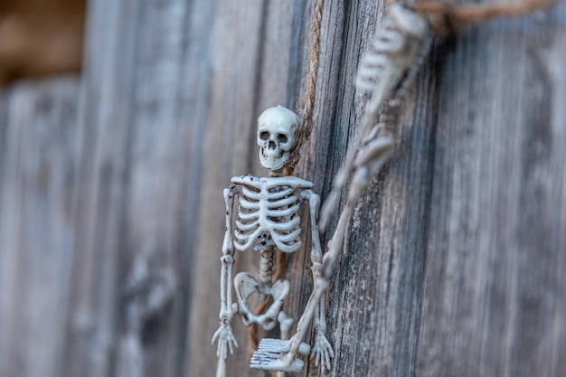 Trick or treat concept. preparation for halloween party. scary traditional decoration skeleton monster with scary face hanging on wooden background. autumn fall happy halloween.