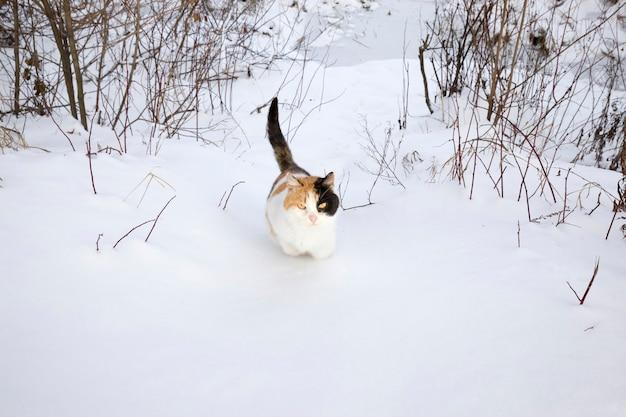 눈 덮인 땅을 걷고있는 빨간색과 검은 색의 삼색 고양이