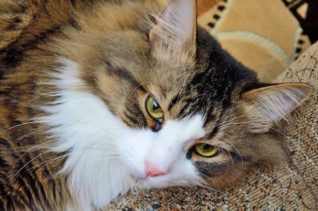 소파 팔에 삼색 고양이