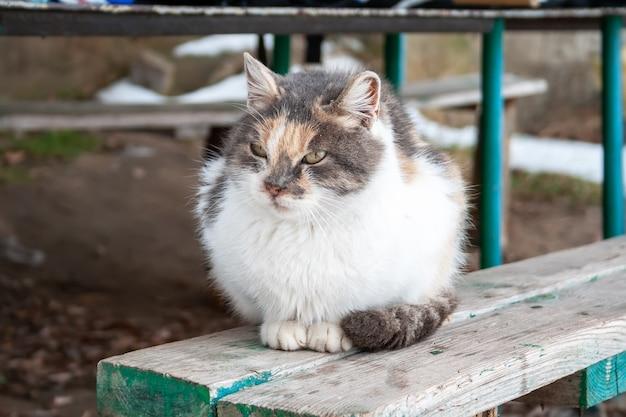 Трехцветный кот сидит на деревянной скамейке