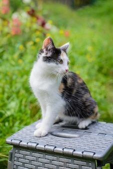 Tricolor kitten on a chair in the garden